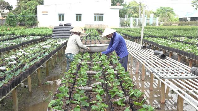 Đồng Tháp: Nông dân Sa Đéc trồng loài cây hoa gì mà trong nước đang cần nhiều, còn bán sang cả nước ngoài? - Ảnh 1.