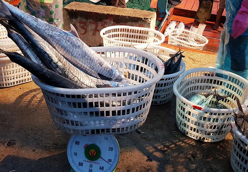 Cá biển có cả trăm loài, vậy tỉnh Quảng Trị đang muốn xây dựng thương hiệu cho loài cá nào? - Ảnh 1.