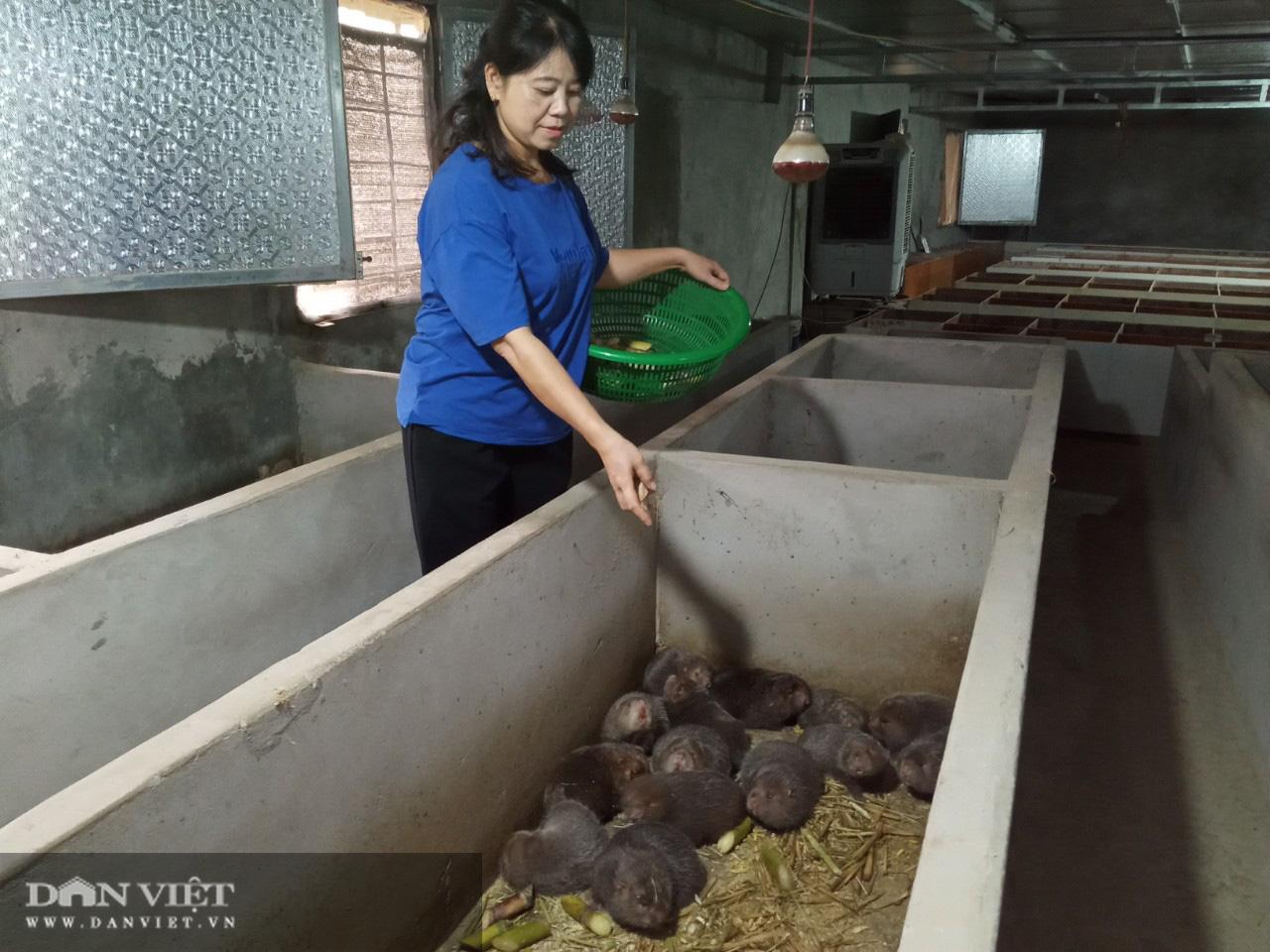 Đút túi trên 1 tỷ mỗi năm nhờ nuôi con chuột khổng lồ ăn cỏ voi, thân tre - Ảnh 2.