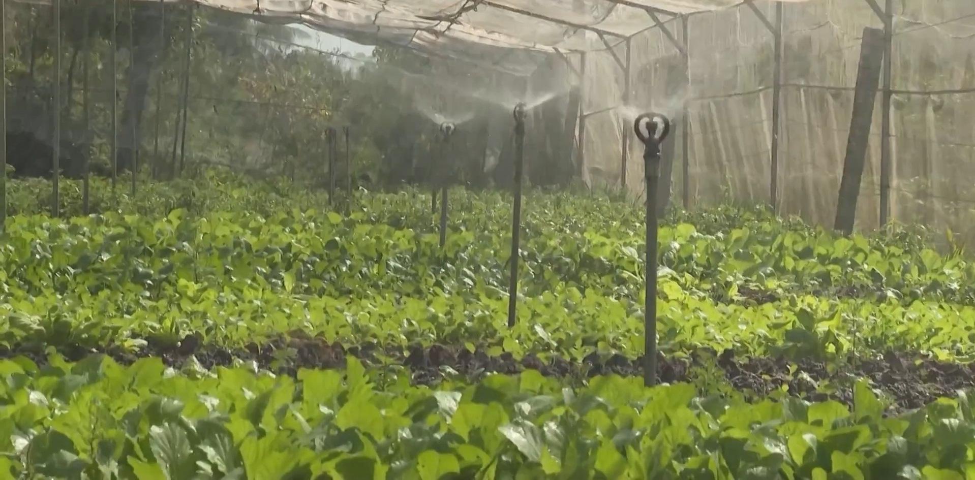 Áp dụng công nghệ 4.0 trồng rau sạch, anh nông dân ung dung thu về 200 triệu/năm - Ảnh 3.