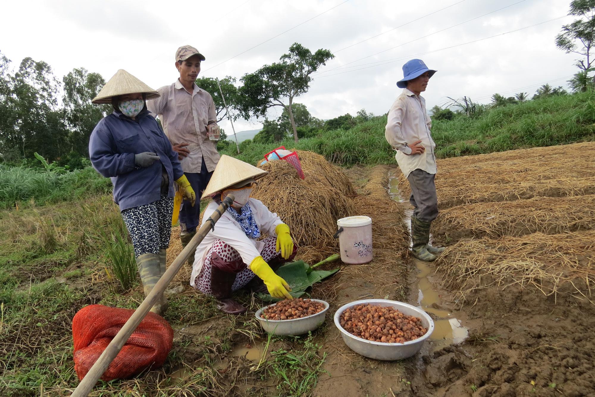 Phú Yên: Dồi dào nguồn vốn cho vay tín dụng chính sách, thoát nghèo - Ảnh 1.