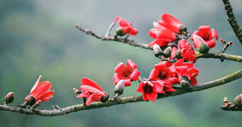 Chùa Hương: Hoa gạo nở bung sắc đỏ dọc suối Yến khiến du khách ngẩn ngơ - Ảnh 4.