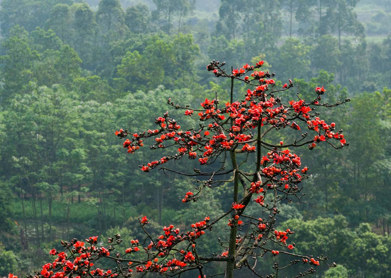 Chùa Hương: Hoa gạo nở bung sắc đỏ dọc suối Yến khiến du khách ngẩn ngơ - Ảnh 5.
