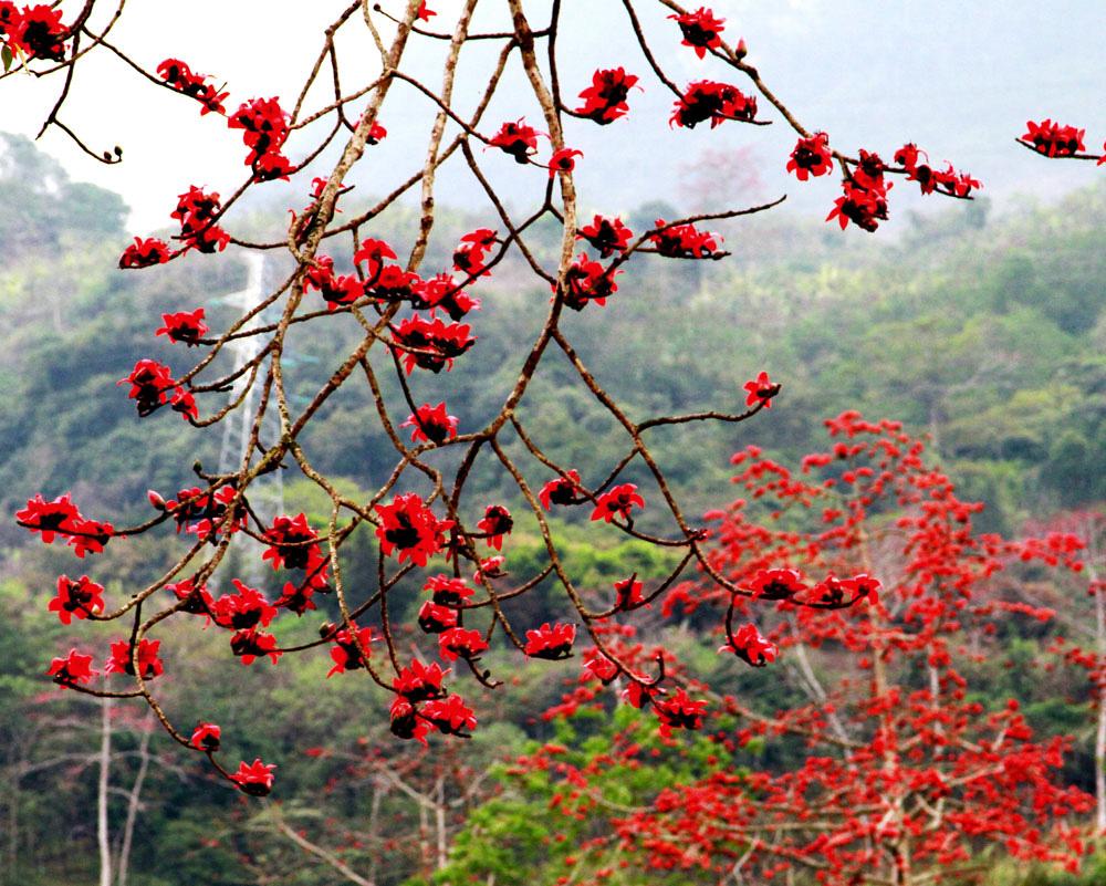 Chùa Hương: Hoa gạo nở bung sắc đỏ dọc suối Yến khiến du khách ngẩn ngơ - Ảnh 2.
