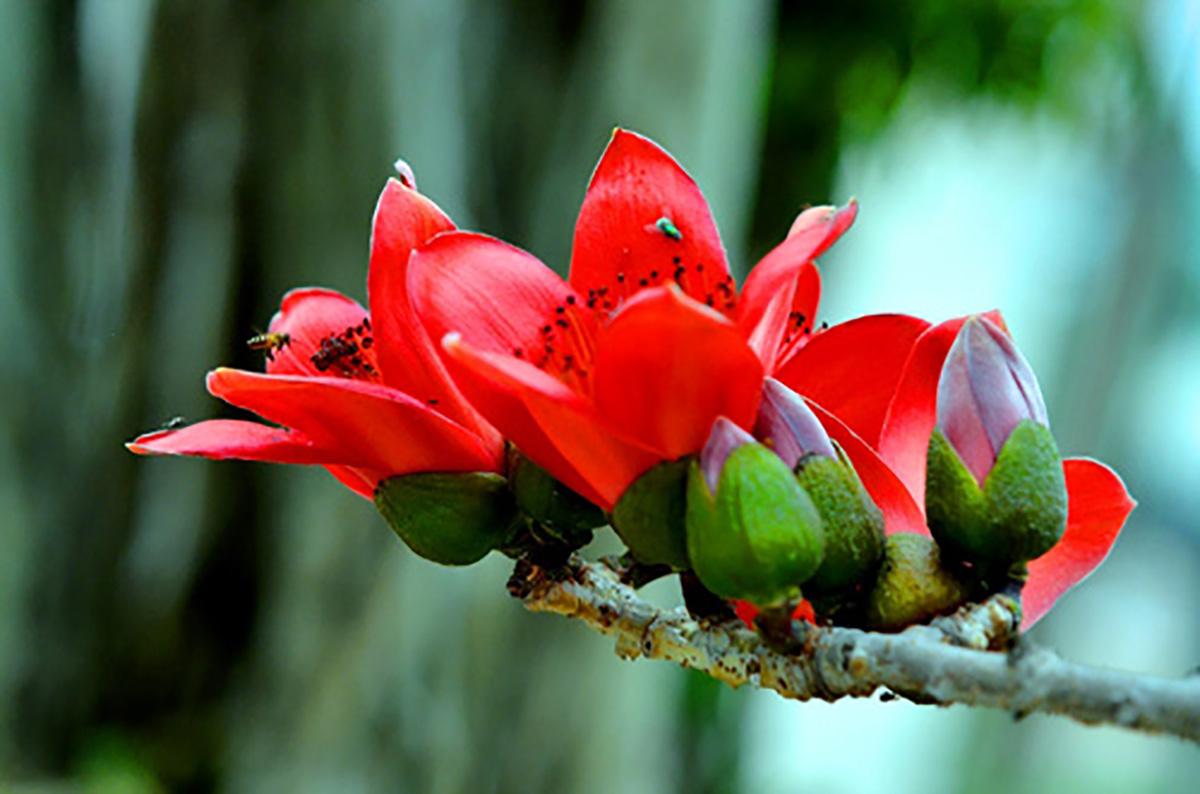 Chùa Hương: Hoa gạo nở bung sắc đỏ dọc suối Yến khiến du khách ngẩn ngơ - Ảnh 3.