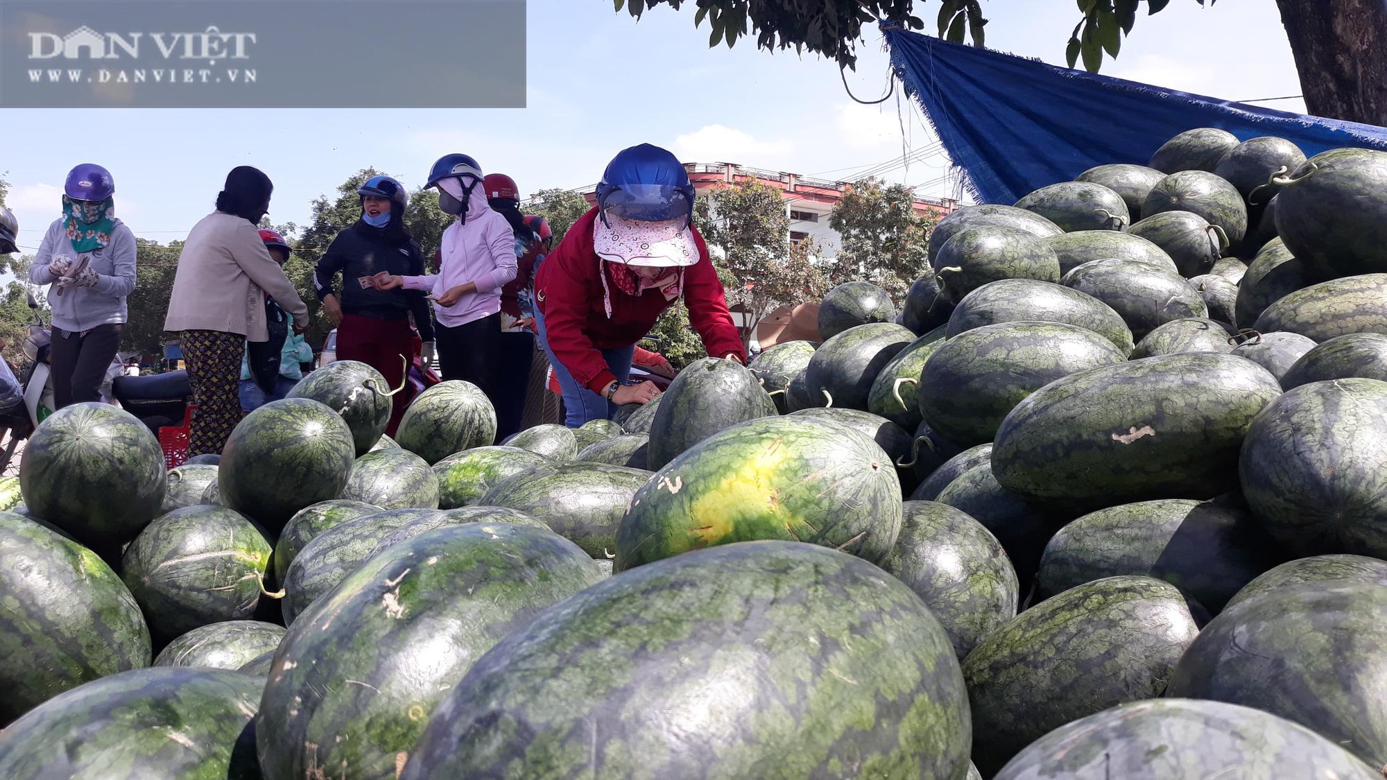 """Bình Định: Quả """"da xanh, ruột đỏ"""" được mua tại ruộng với giá 7.000 đồng/kg, người nông dân kỳ vọng có lãi  - Ảnh 2."""