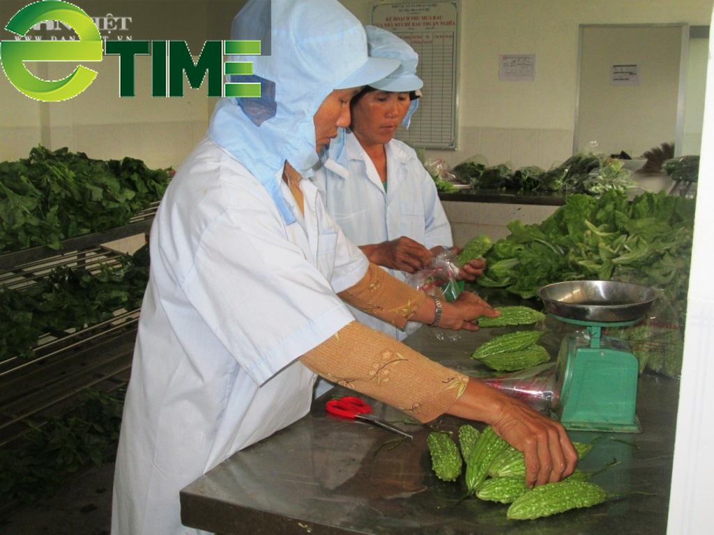 Hơn 1.000 hộ nông dân Bình Định trồng rau an toàn - Ảnh 1.