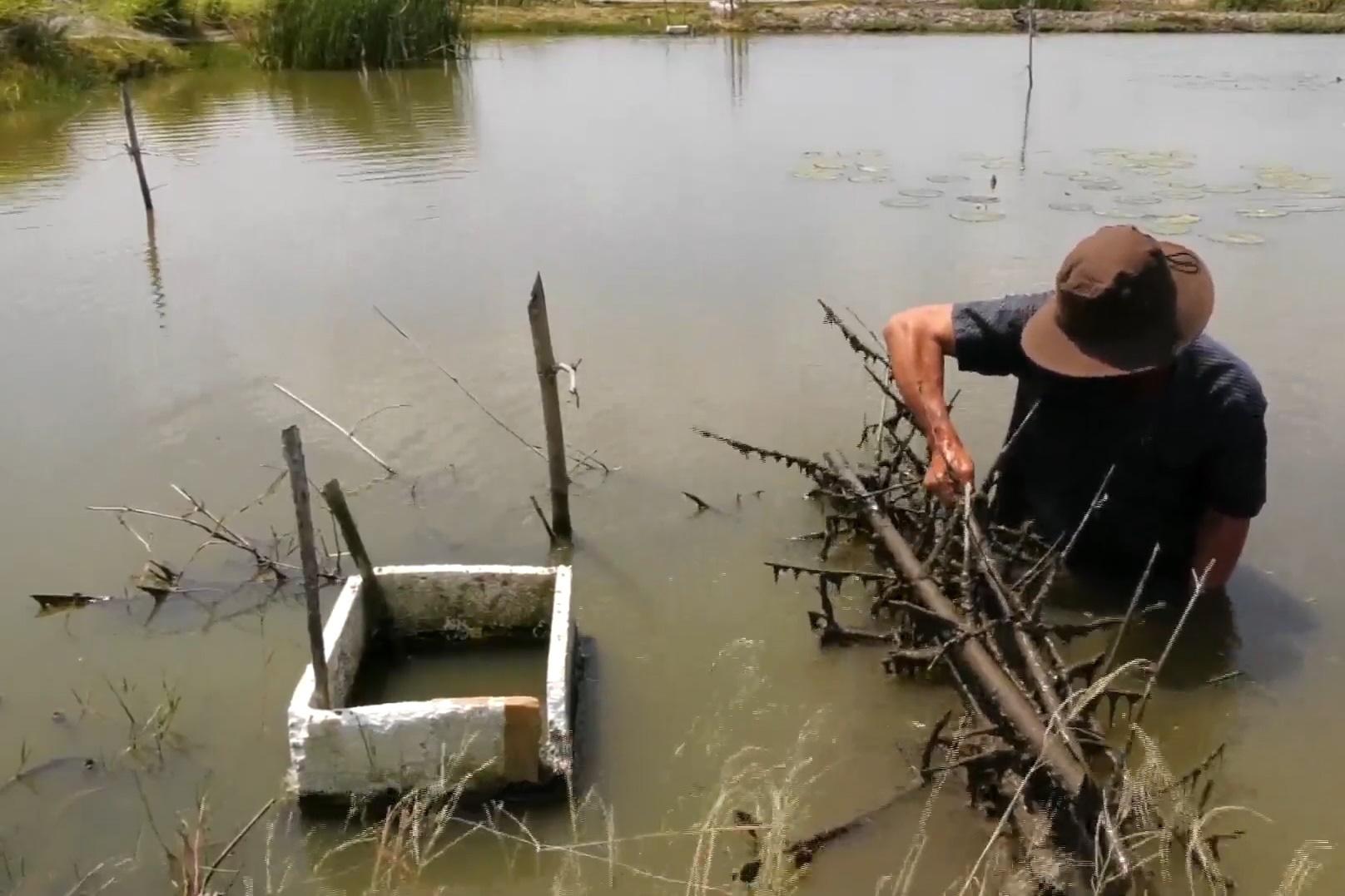 Khởi nghiệp thành công mô hình nuôi cá chạch lấu, lão nông háo hức chờ ngày thu hoạch bội thu - Ảnh 4.