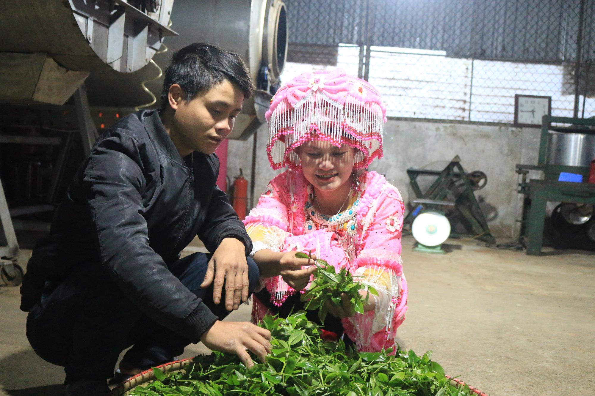 """Tuyên Quang: Từ một cây chỉ lấy lá đun nước đã thành OCOP """"4 sao"""" - Ảnh 4."""