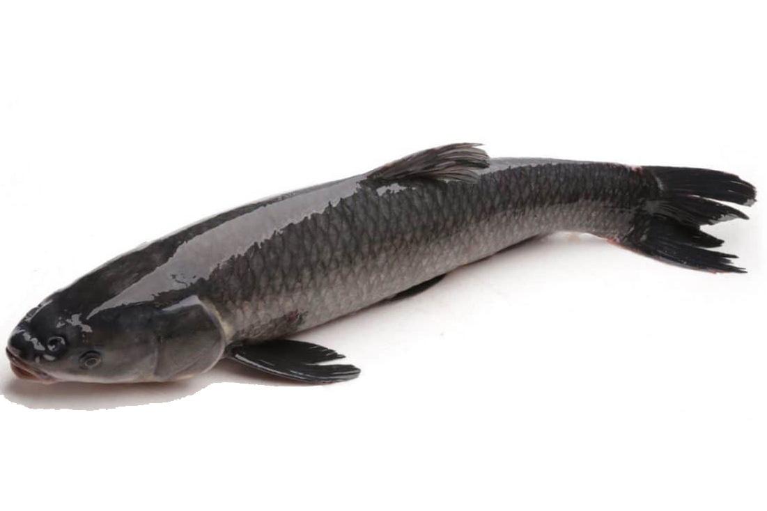 Video: Hướng dẫn kỹ thuật nuôi cá trắm đen trong lồng bè hiệu quả nhất - Ảnh 2.