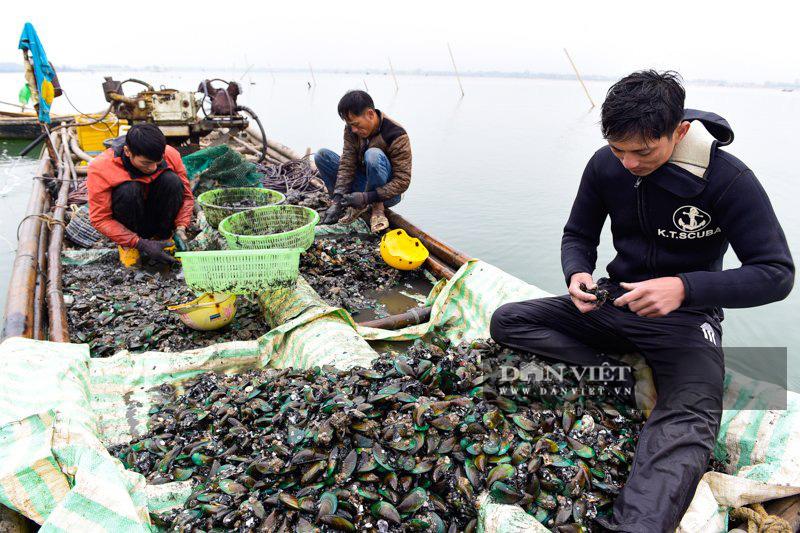 Kiếm tiền triệu mỗi ngày dưới đáy sông Yên - Ảnh 5.