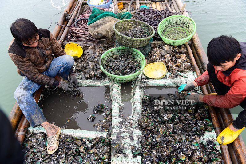Kiếm tiền triệu mỗi ngày dưới đáy sông Yên - Ảnh 10.
