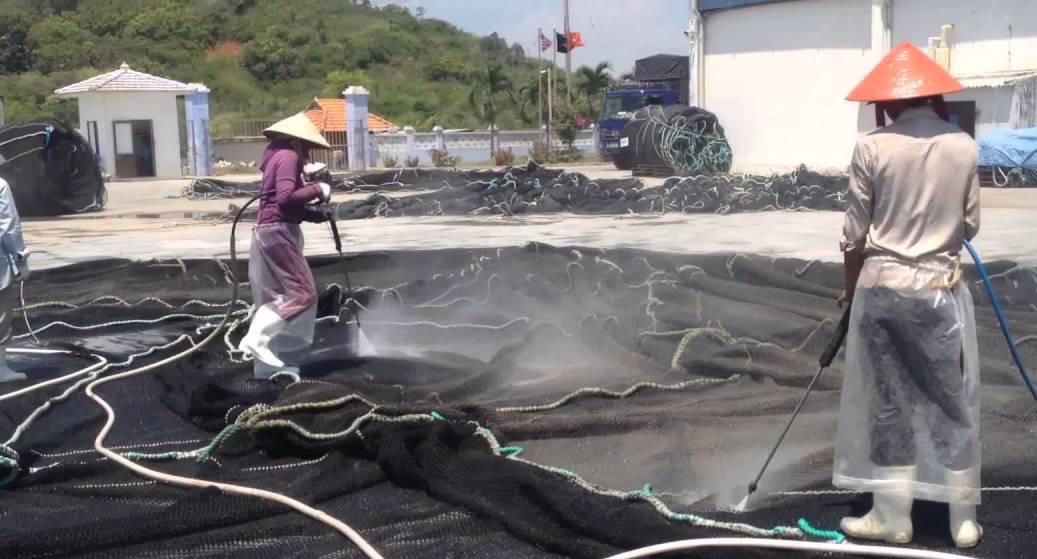 Video: Hướng dẫn kỹ thuật nuôi cá trắm đen trong lồng bè hiệu quả nhất - Ảnh 10.