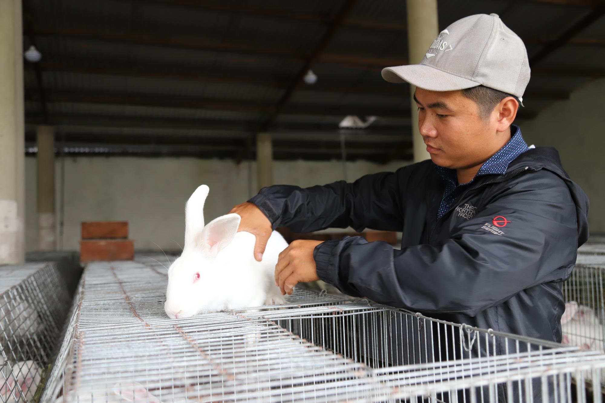9X bỏ lương 40 triệu đồng, nuôi thỏ Newzealand thu nhập hơn 1 tỷ đồng/năm - Ảnh 4.
