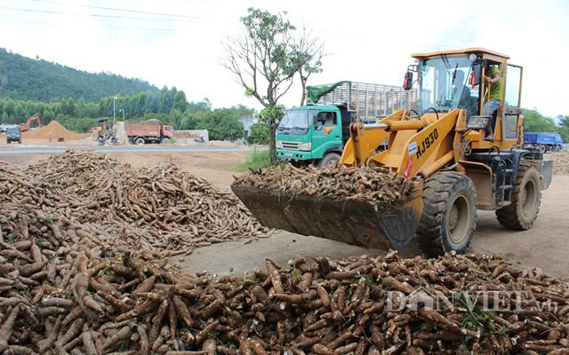 Một điểm thu mua mì ở Bình Thuận