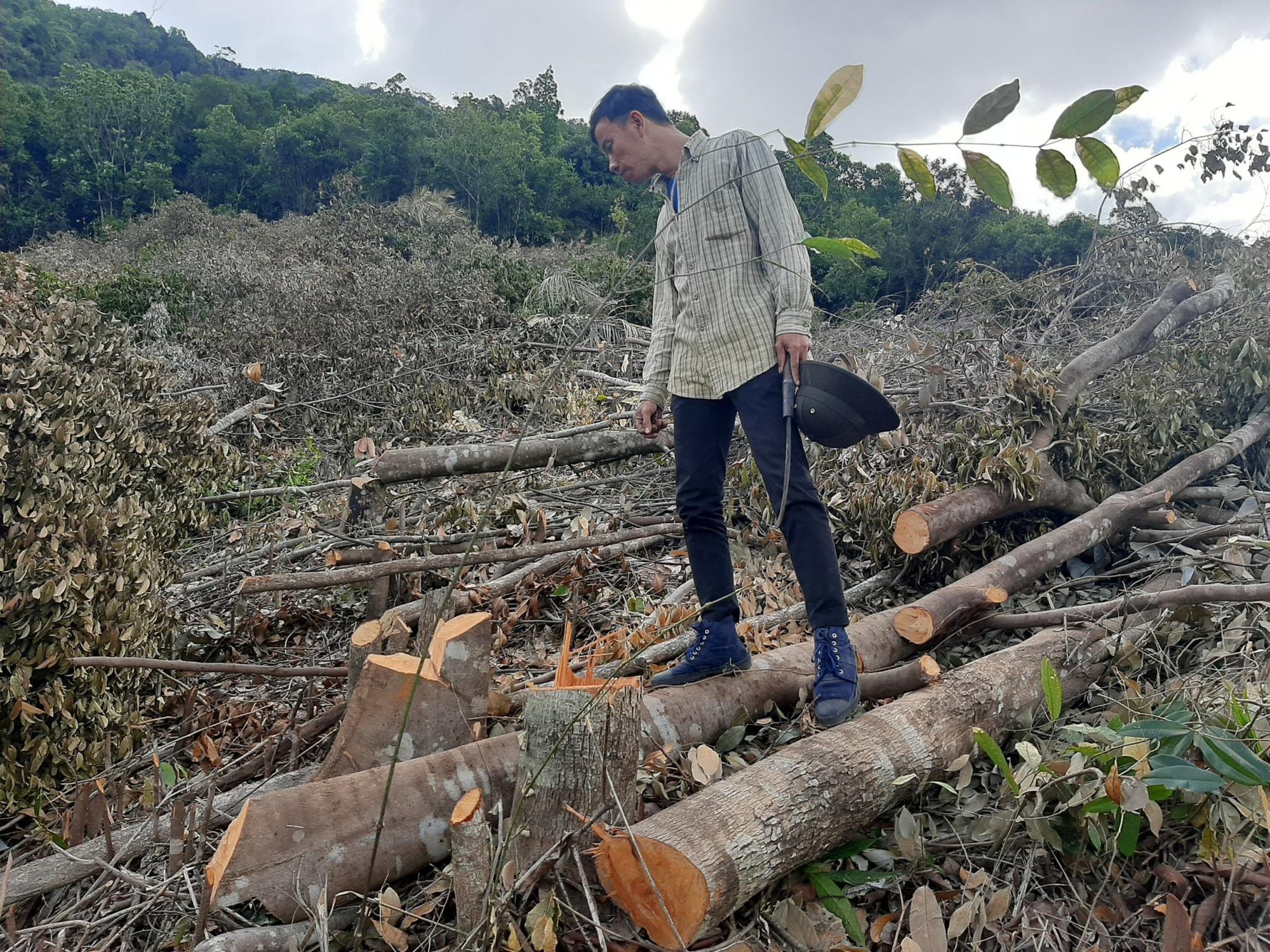 Khánh Hòa: Để xảy ra xâm phạm, chặt phá đất rừng UBND xã Suối Tân bị phê bình - Ảnh 1.