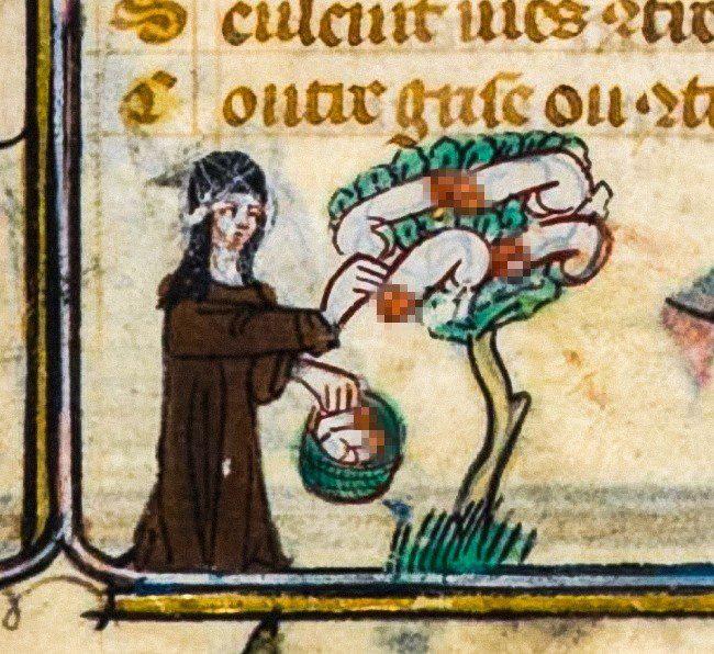 Quan niệm sai lầm của người Trung Cổ khiến bạn cười ra nước mắt! - Ảnh 2.