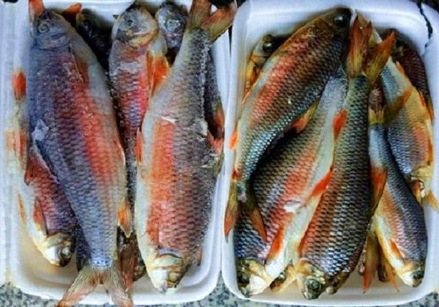 """Bình Định: Loài cá chỉ vượt thác để sinh sản, ăn cùng với loại rau tên nghe bắt tai, bán """"đắt như tôm tươi"""" - Ảnh 4."""