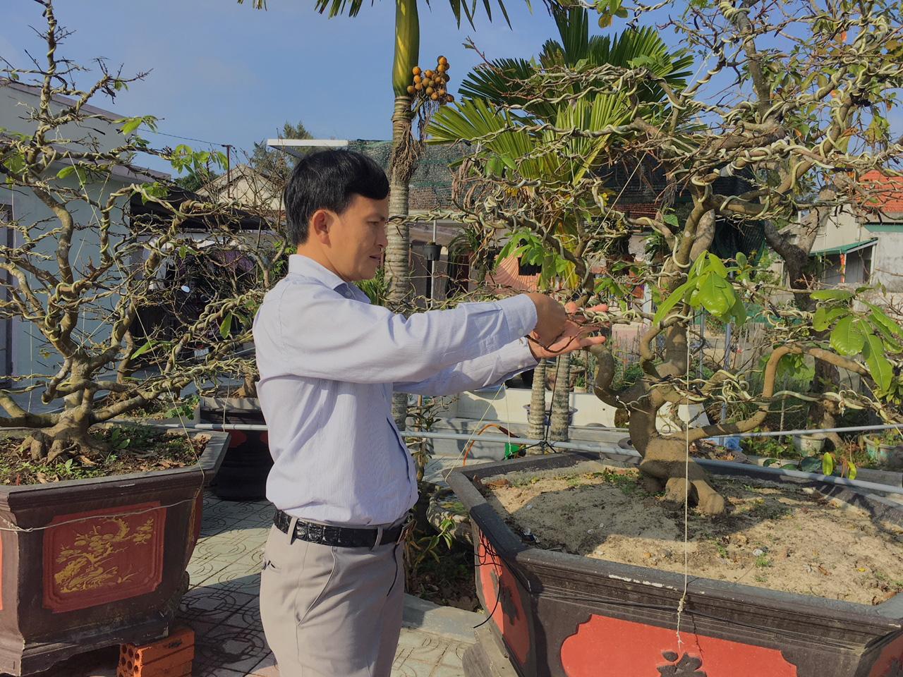 """Huế: Loài cây này bỗng nhiên tăng giá cái vù, có cây bán được cả tỷ đồng, đai gia nói """"thời thế tạo anh hùng"""" - Ảnh 1."""