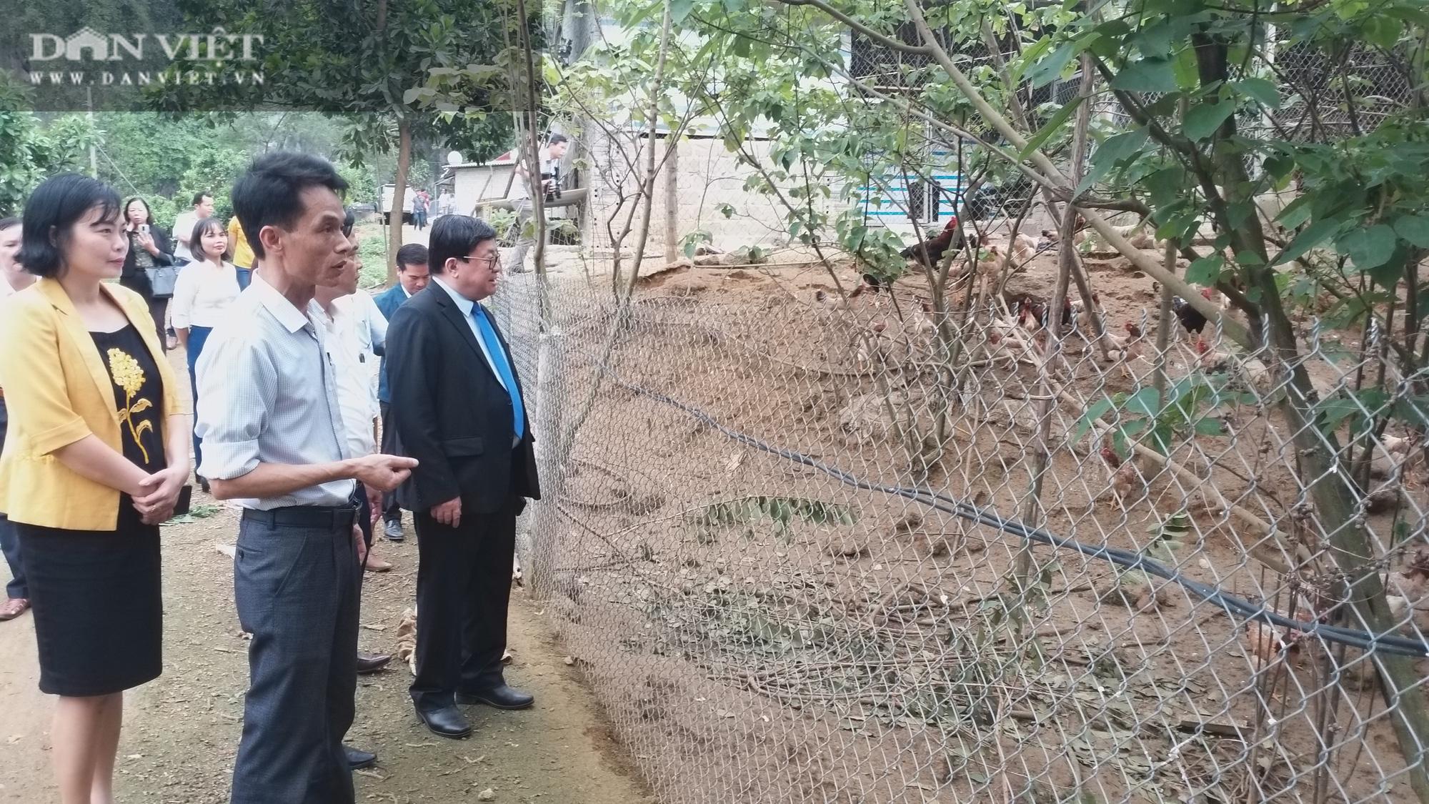 Chủ tịch Hội Nông dân Việt Nam vào hàng đá thăm trang trại nuôi con đặc sản năm thu gần 7 tỷ đồng - Ảnh 2.