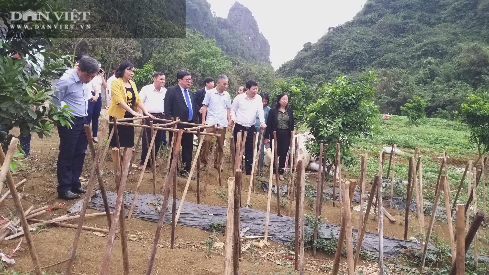 Chủ tịch Hội Nông dân Việt Nam vượt hàng đá thăm trang trại nuôi con đặc sản thu gần 7 tỷ đồng/năm ở Hòa Bình - Ảnh 7.