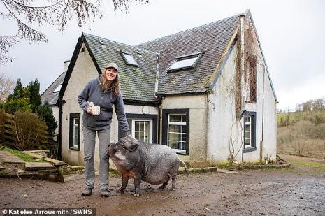 Chuyện lạ: Lợn ỉ Việt Nam nặng 130 kg được nuôi làm thú cưng suốt 3 năm qua - Ảnh 2.