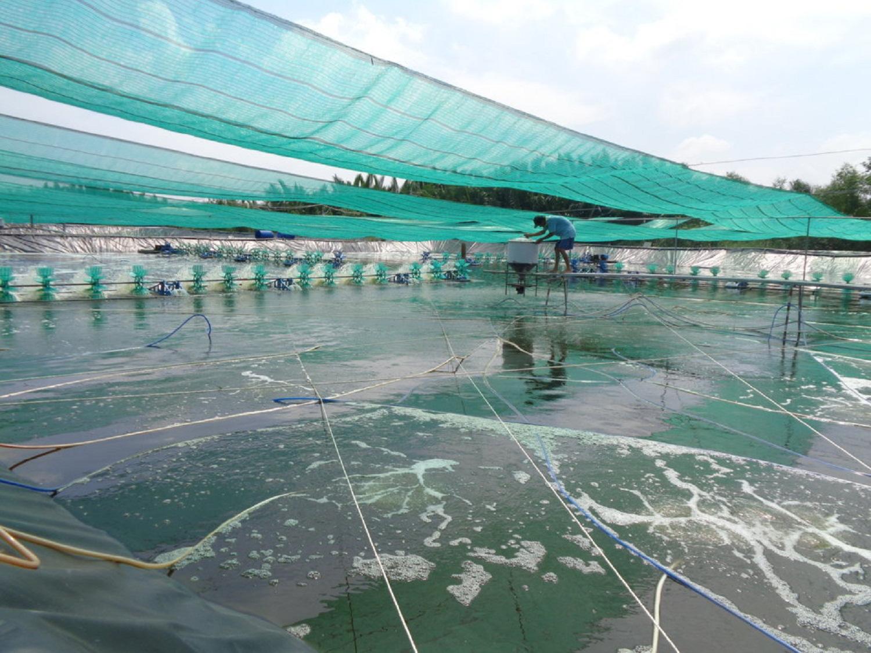 Long An: Sản xuất thuận thiên, nông dân vùng mặn tha hồ làm giàu từ con tôm, thanh long - Ảnh 2.
