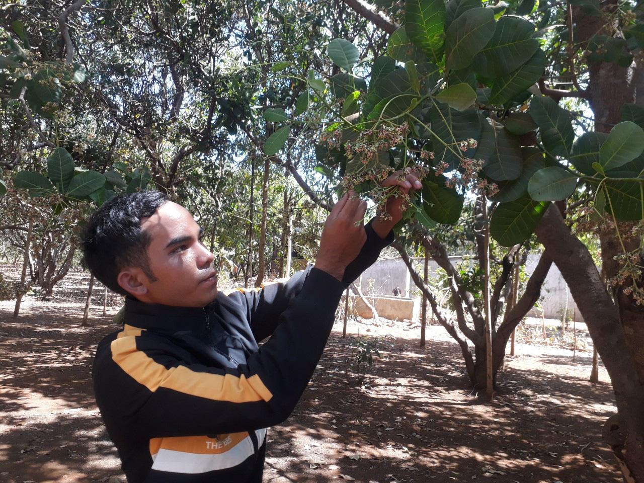 Hàng nghìn nông dân lo lắng mất mùa vì điều ra quả ít dù rất nhiều hoa - Ảnh 4.