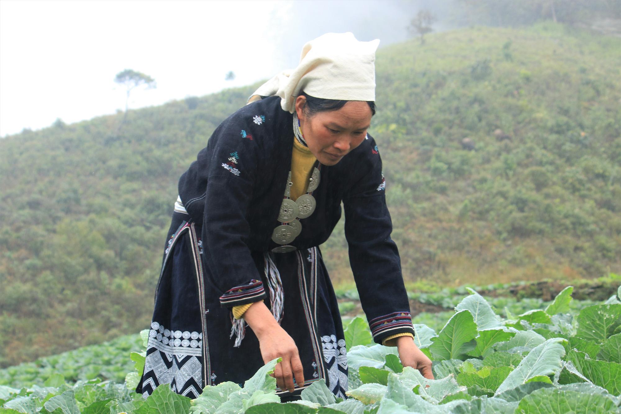 Tuyên Quang: Trồng rau hữu cơ trên đỉnh Kia Tăng thu nhập tăng gấp 3 lần so với trồng ngô, lúa. - Ảnh 3.