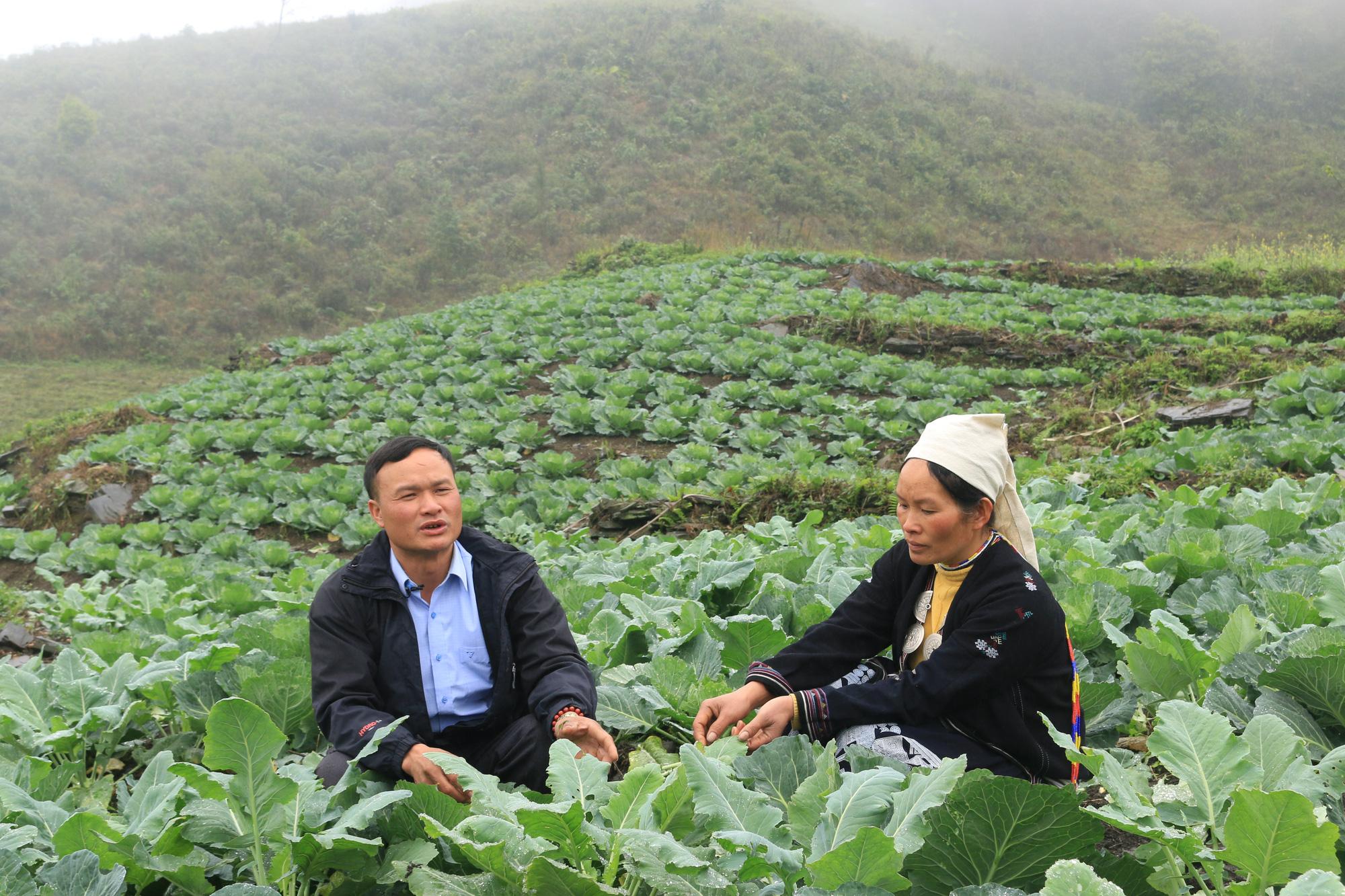 Tuyên Quang: Trồng rau hữu cơ trên đỉnh Kia Tăng thu nhập tăng gấp 3 lần so với trồng ngô, lúa. - Ảnh 4.
