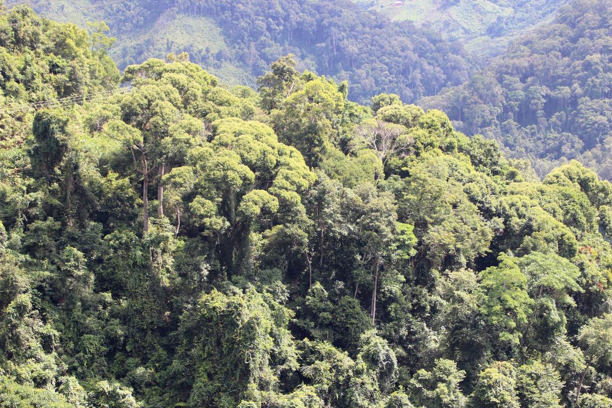 Điện Biên: Thủ phủ gỗ Nghiến được bảo vệ nghiêm ngặt nhất - Ảnh 4.