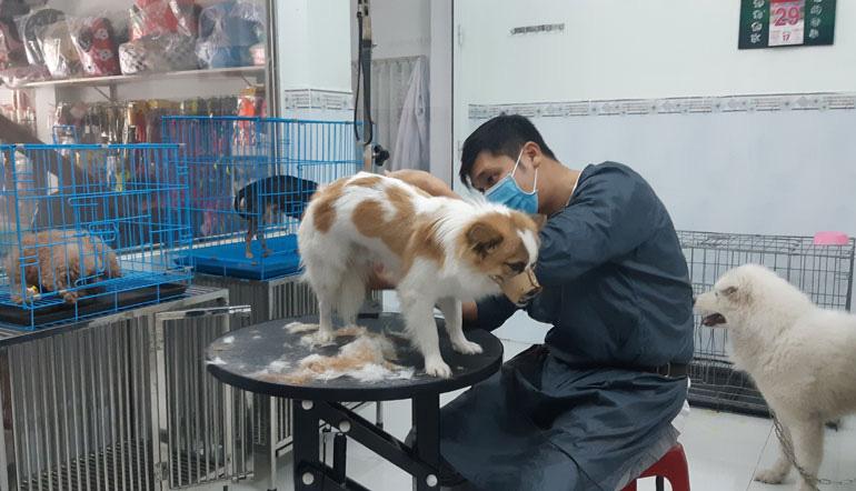 Phú Yên: Lấy ráy tai, cắt móng, mát xa cho những loài thú này mà kiếm bộn tiền - Ảnh 1.