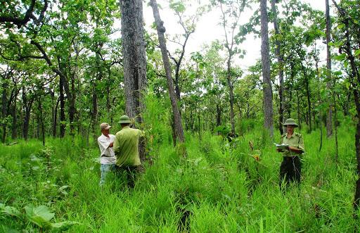 Điện Biên: Thủ phủ gỗ Nghiến được bảo vệ nghiêm ngặt nhất - Ảnh 2.