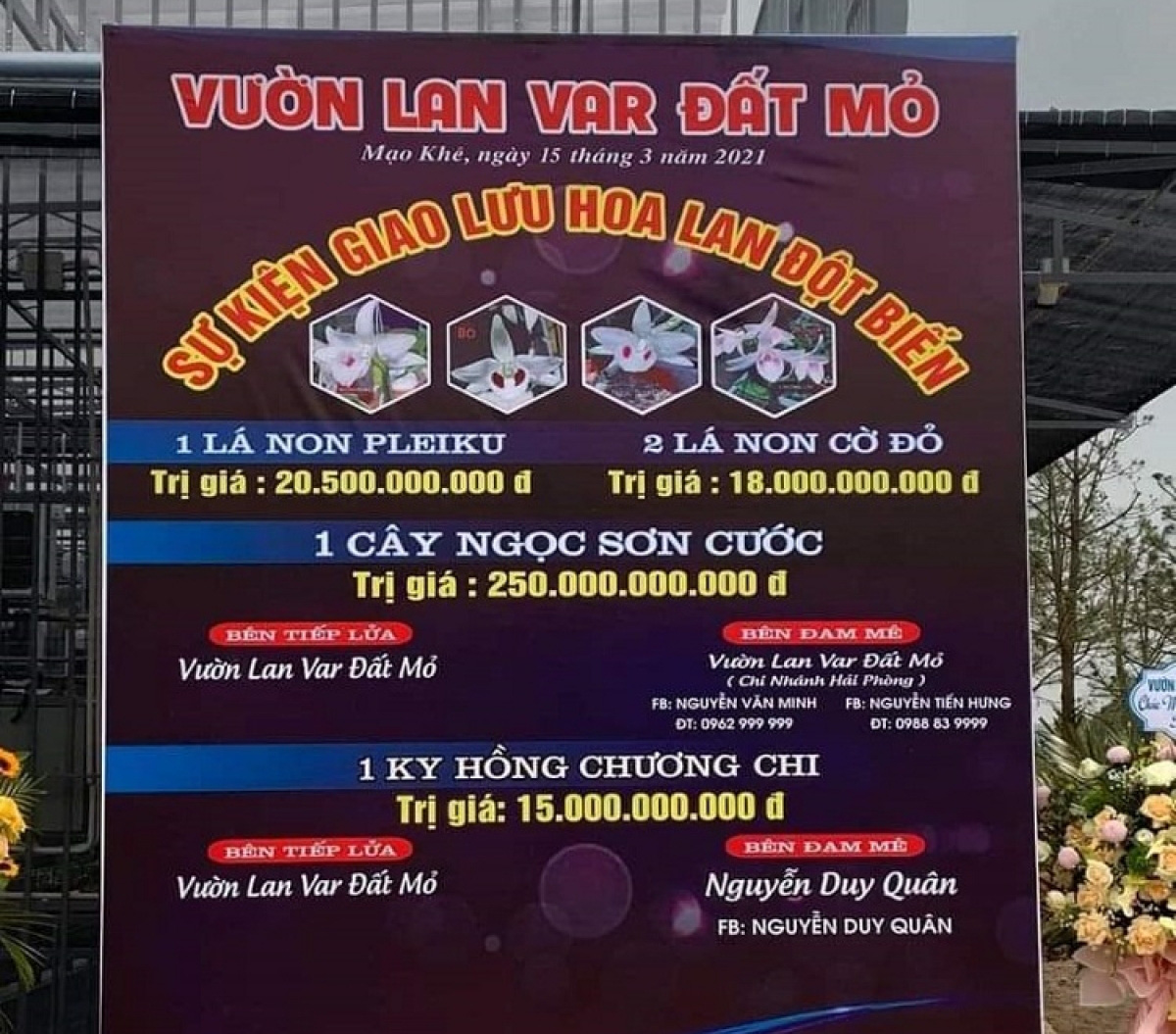 Phi điệp đột biến Ngọc Sơn Cước bán 250 tỷ: Mua bán lan đột biến cả nghìn tỷ cũng không thu được đồng thuế nào - Ảnh 1.