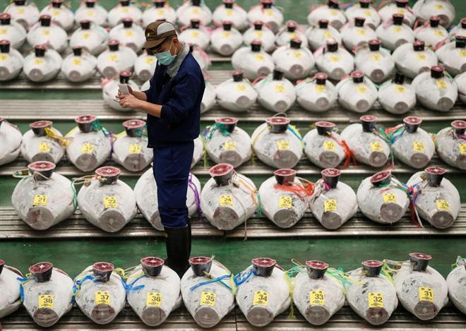 Hóa ra đây là cách biến cá ngừ hay quả dưa và số nông, thủy hải sản đắt như vàng ở Nhật - Ảnh 1.
