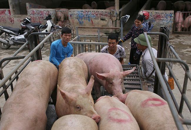 Giá nông sản hôm nay 2/3: Lợn hơi giảm trên toàn quốc, tiêu tăng 500 đồng/kg - Ảnh 1.