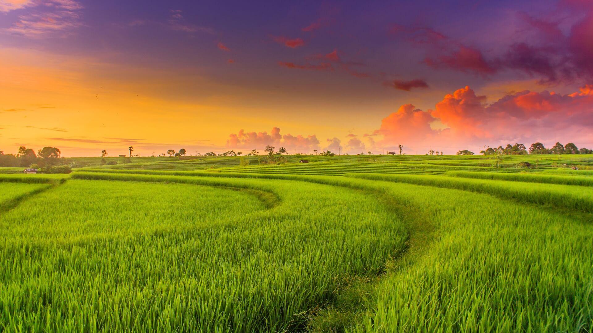 Điều kiện sang tên đất trồng lúa năm 2021 - Ảnh 1.