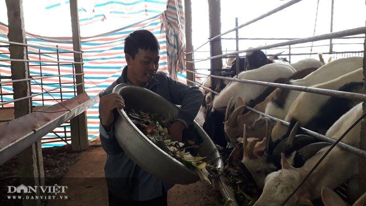 Thái Nguyên: Lão nông đổi đời nhờ nuôi con be be suốt cả ngày - Ảnh 1.
