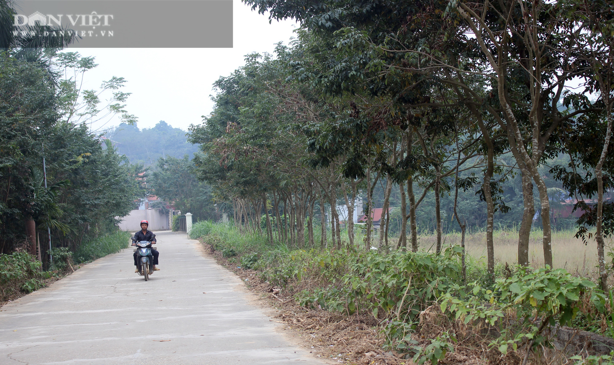 Phú Thọ : Choáng ngợp với thủ phủ sưa đỏ, ra đường gặp tỷ phú - Ảnh 1.