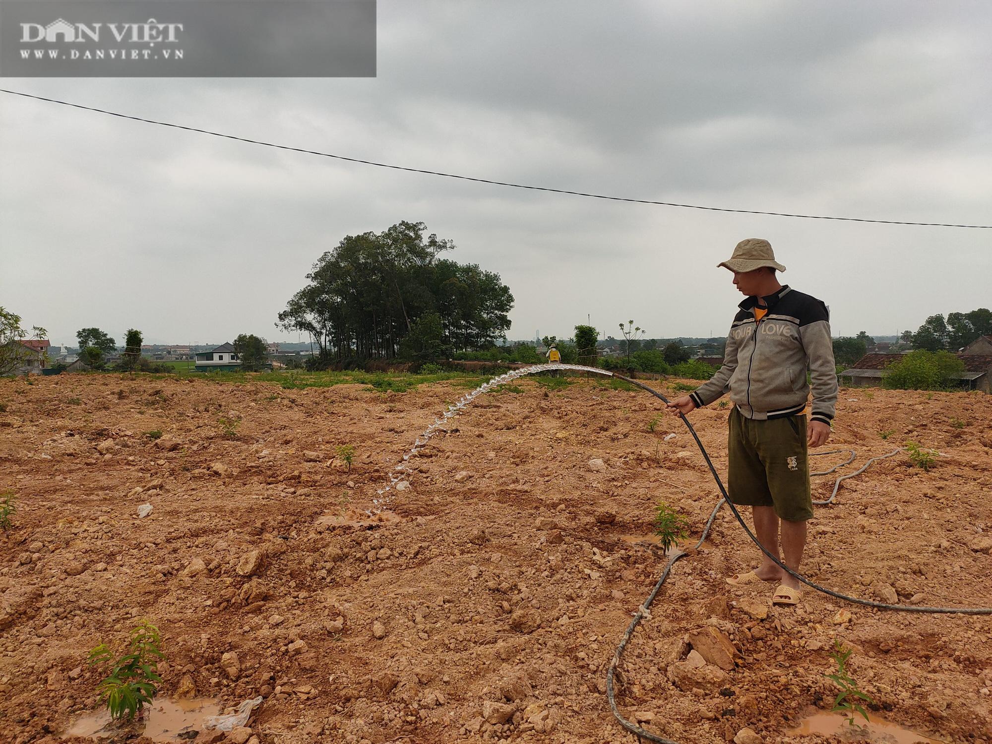 Clip: Nông dân Hà Tĩnh tất bật vào vụ đào mới - Ảnh 4.