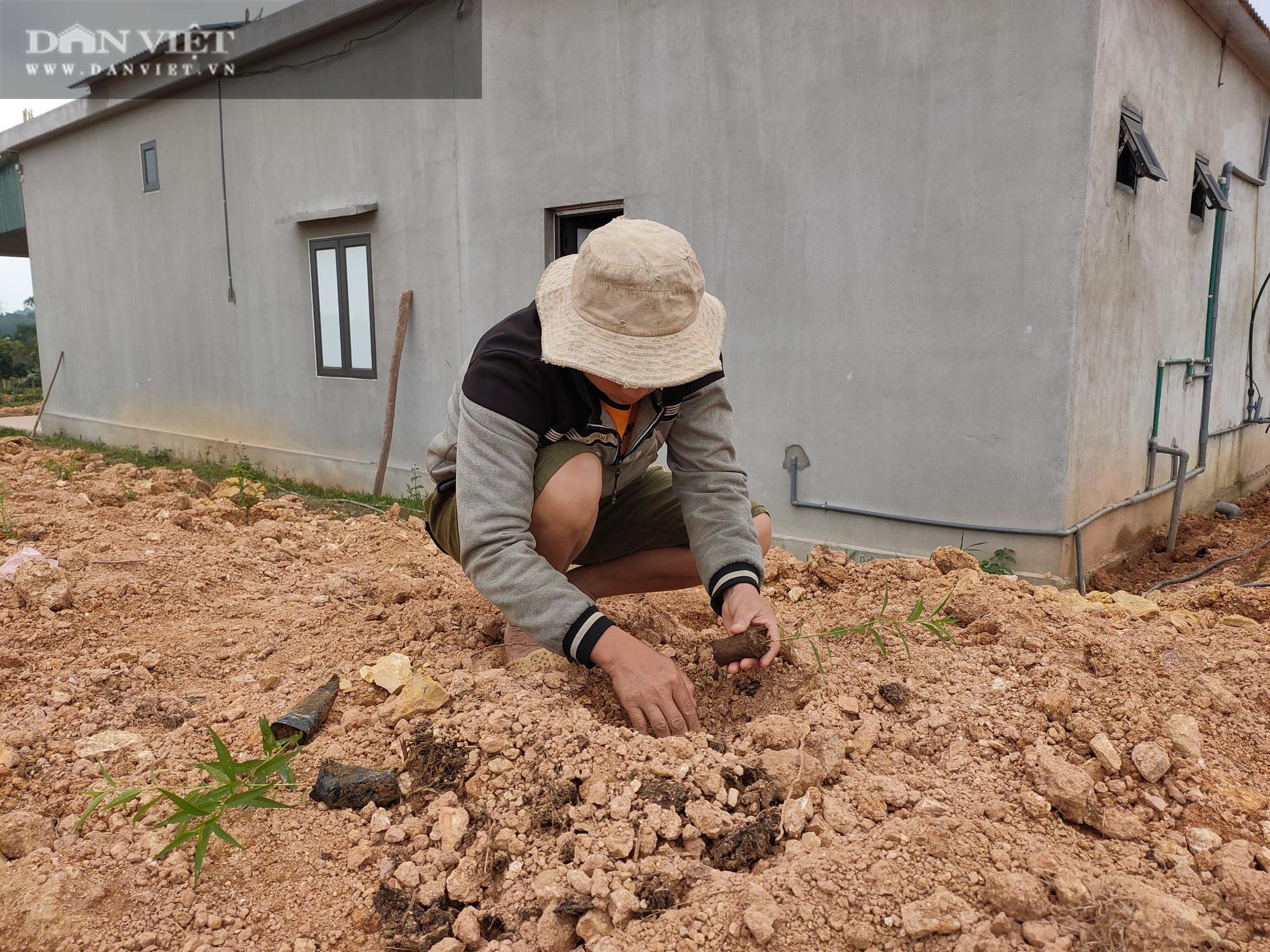 Clip: Nông dân Hà Tĩnh tất bật vào vụ đào mới - Ảnh 6.
