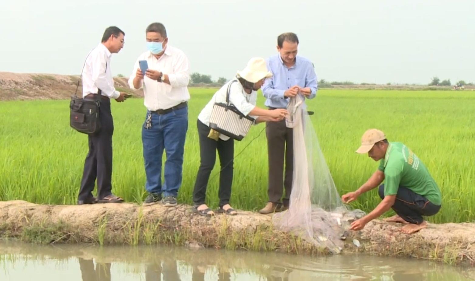 Đồng Tháp: Nông dân dự án ICRSL hướng đến sản xuất hữu cơ, tìm kiếm lợi nhuận lâu dài - Ảnh 2.