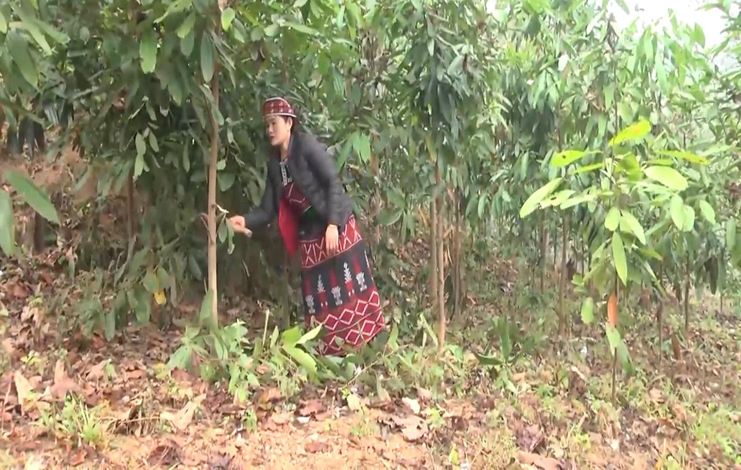 Yên Bái: Tấm gương người phụ nữ Phù Lá làm kinh tế giỏi, vươn lên thoát nghèo - Ảnh 2.