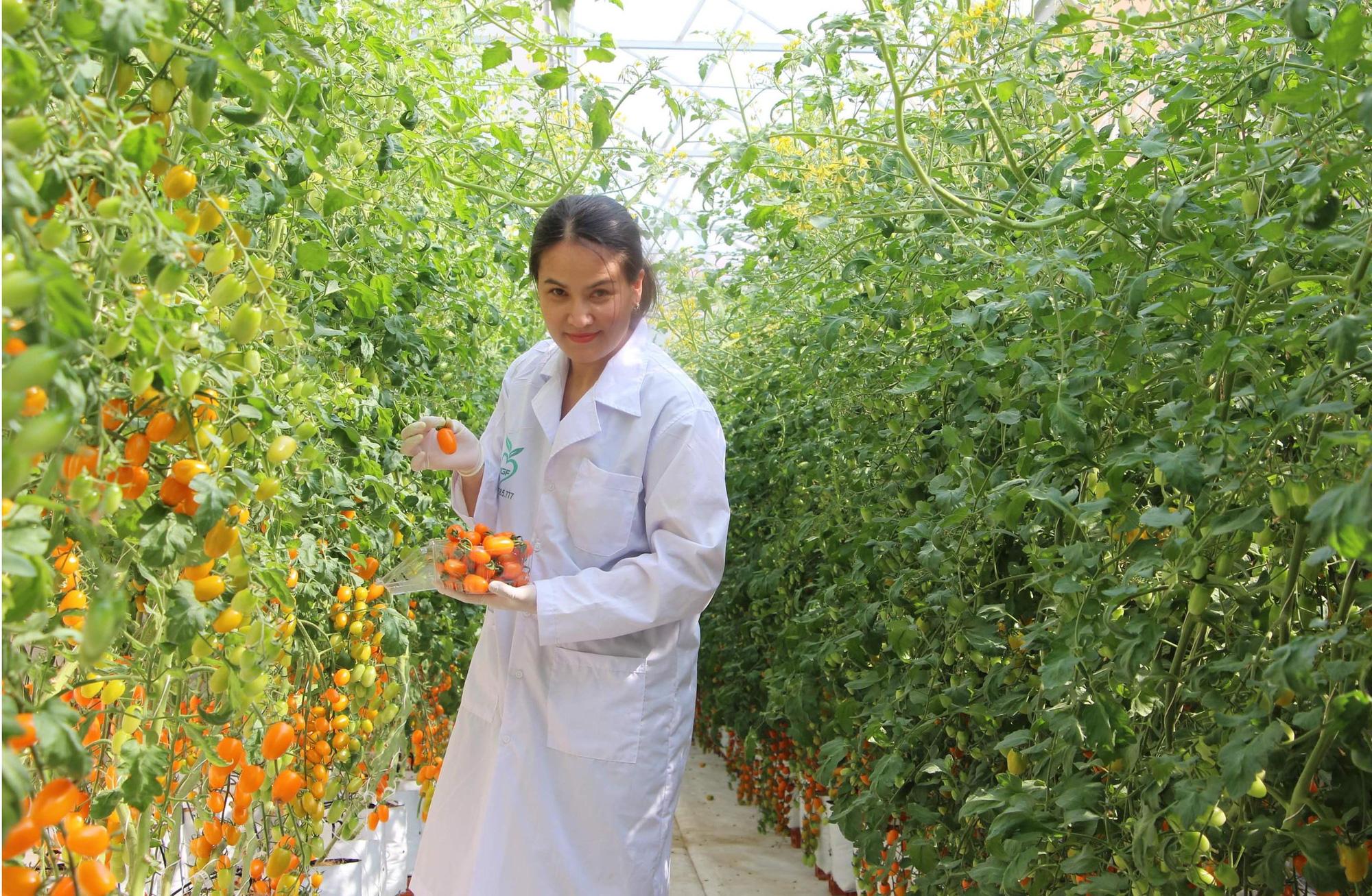 Mê mẩn vườn cà chua Nova công nghệ cao của cô giáo đam mê nông nghiệp sạch - Ảnh 1.