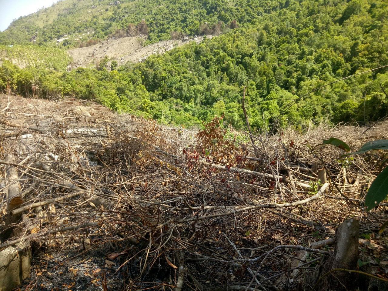 Khánh Hòa: Hơn 7.000m2 rừng bị chặt phá trái phép, ai là thủ phạm? - Ảnh 2.