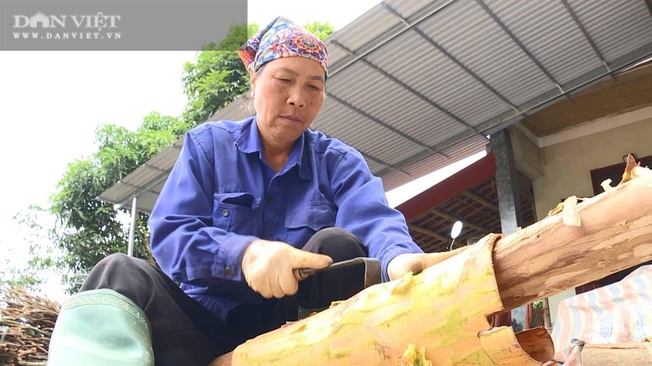 Phú Thọ: Trồng cây vỏ cay, ép lấy tinh dầu nằm tốp đầu các vị thuốc quý giúp bà Vân giàu có - Ảnh 4.