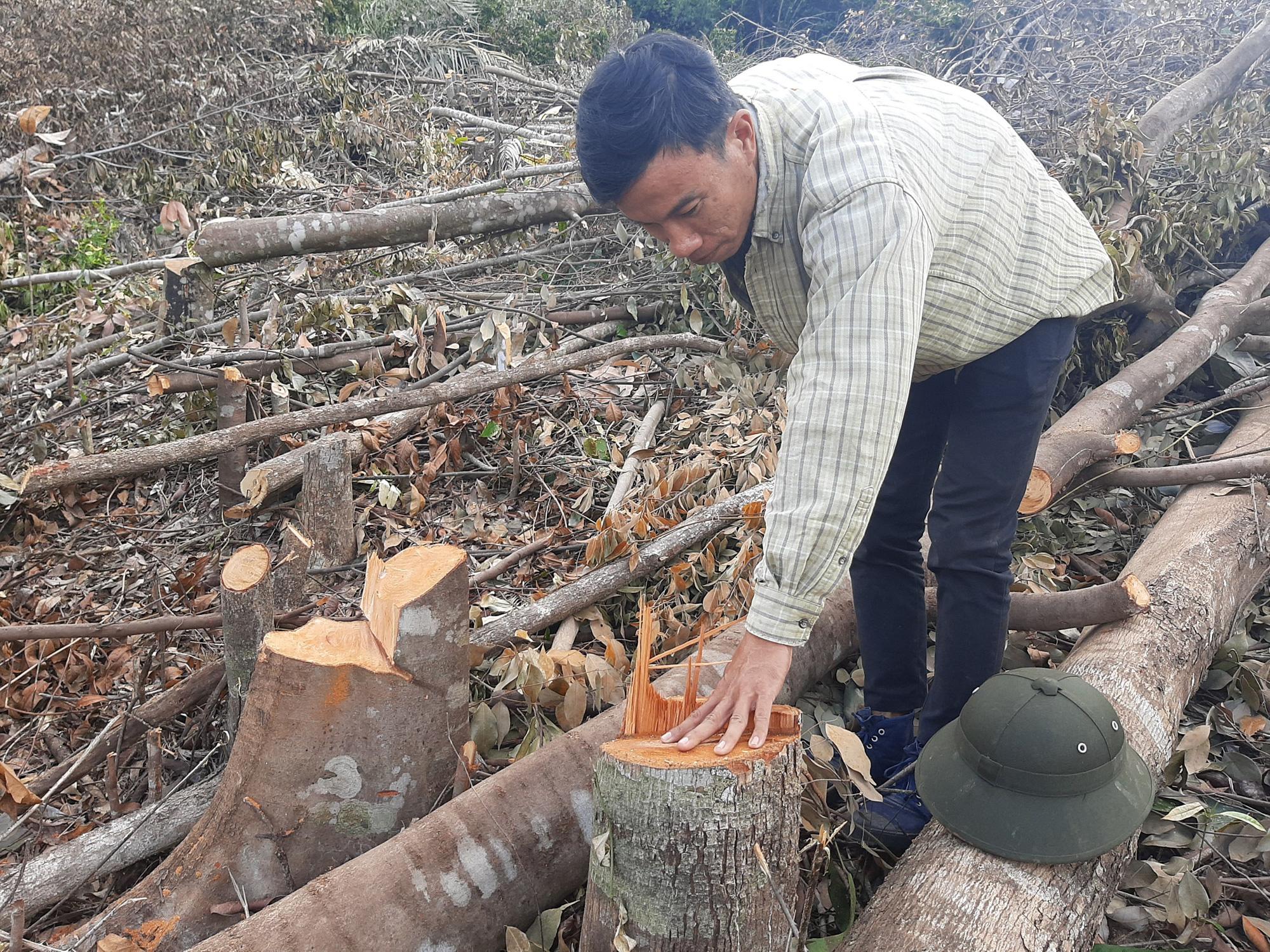 Khánh Hòa: Hơn 7.000m2 rừng bị chặt phá trái phép, ai là thủ phạm? - Ảnh 3.