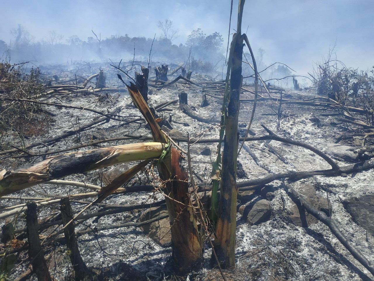 Khánh Hòa: Hơn 7.000m2 rừng bị chặt phá trái phép, ai là thủ phạm? - Ảnh 1.