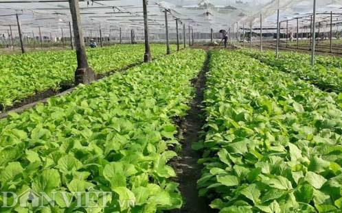 Thái Nguyên chi hơn 430 tỷ đồng tái cơ cấu nông nghiệp