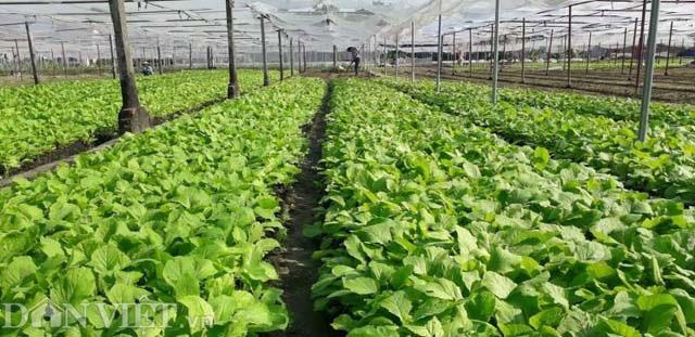 Phổ Yên – Thái Nguyên đầu tư hơn 430 tỷ đồng tái cơ cấu nông nghiệp - Ảnh 1.